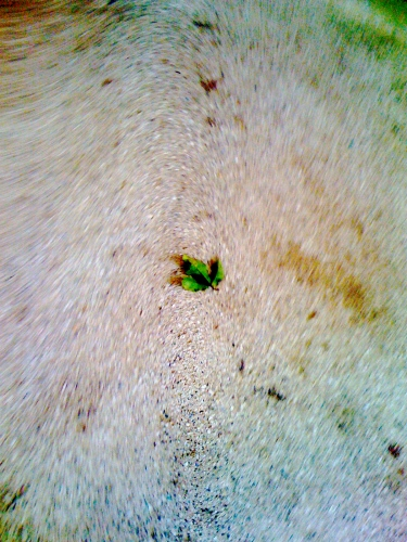 """""""Still Leaf"""" by Sunny Rowland"""