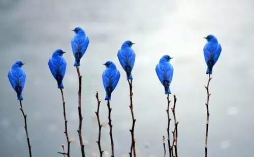 bird-bleu-cute-funny-favim-com-2651356